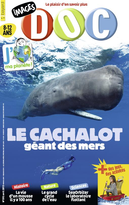 Le cachalot, géant des mers