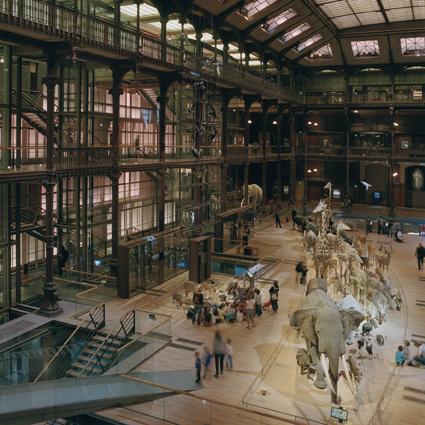 La Grande Galerie de l'Évolution, Muséum National d'Histoire Naturelle