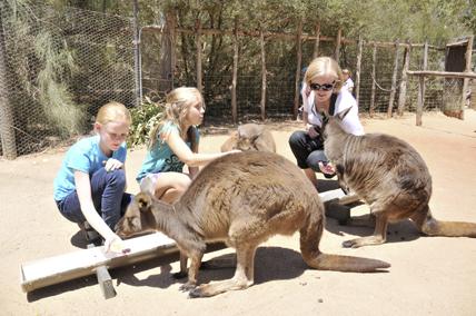 Enclos à kangourous et public, au zoo de Melbourne (Australie). © Melbourne Zoo