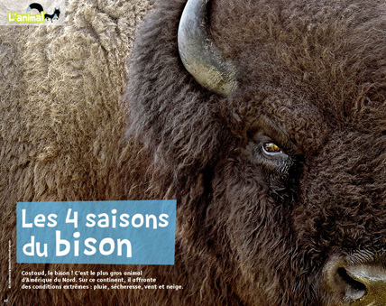 319-Animal-Bison