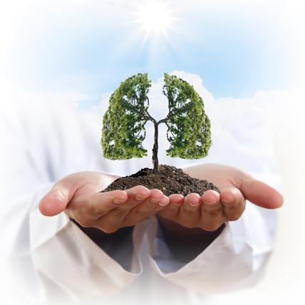 Les arbres purifient l'air de la Terre ! © Sergey Nivens / Fotolia