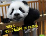 Ecrangeant-Panda