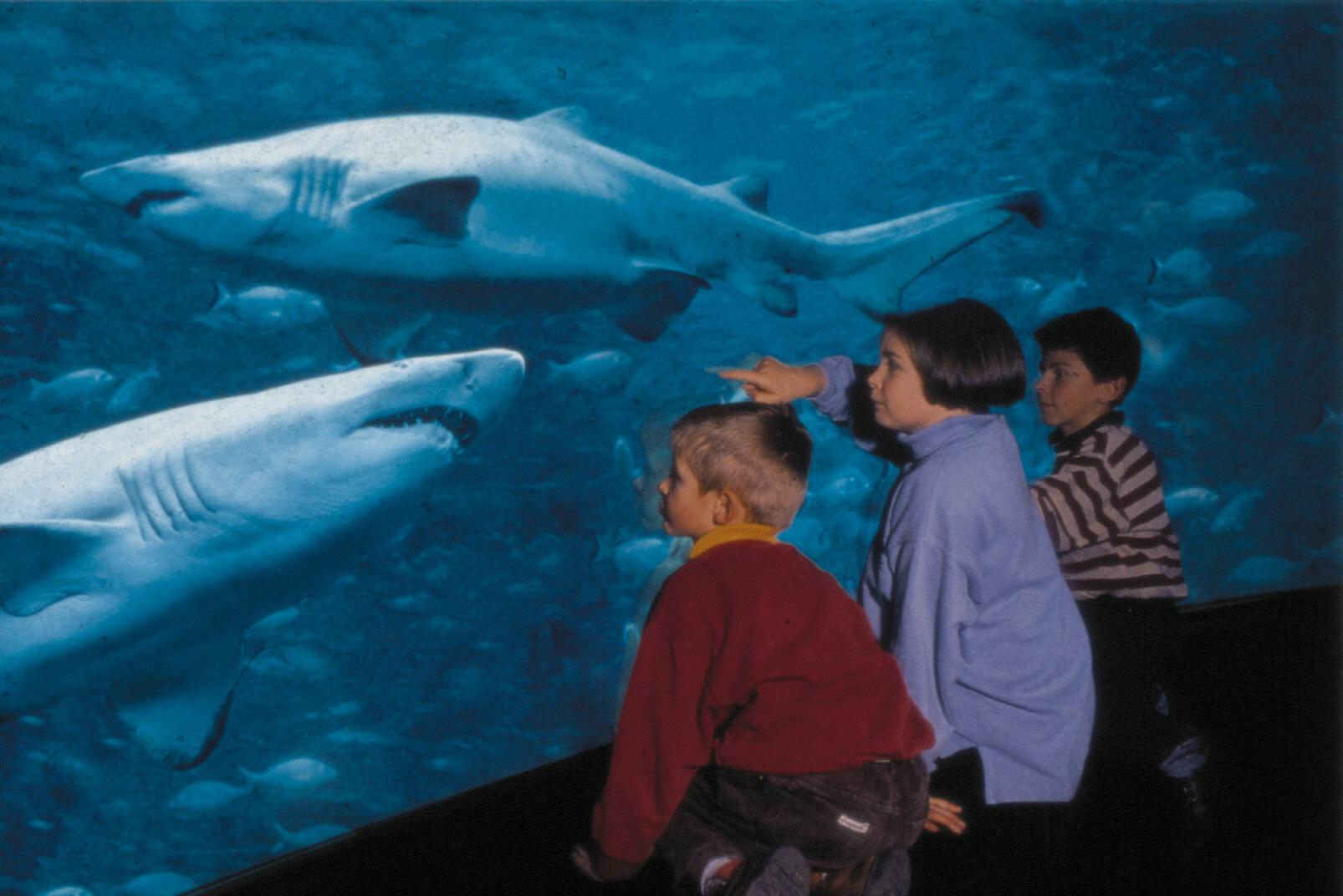 Enfants et requins NAUSICAA