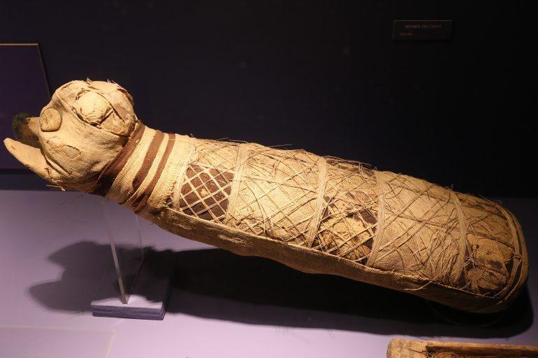 Dans l'Egypte antique, même les animaux étaient momifiés, ici un chat © Pymouss/Musée des Beaux-Arts de Rennes/Wikipédia
