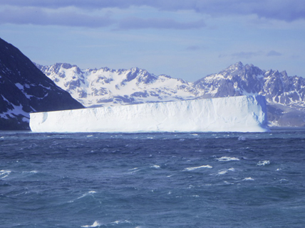 Iceberg tabulaire dérivant au large de l'île de Géorgie du Sud, à environ 1480 km de l'Antarctique! © David Stanley