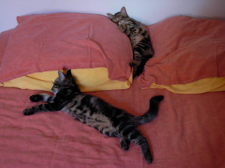 chats ronron