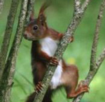 ecureuil-recadre