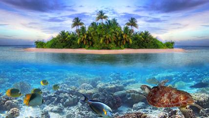 Petite île tropicale dans le Pacifique © Droits réservés