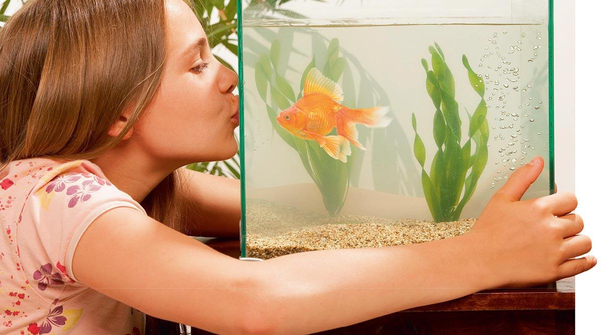 Qui va s'occuper de l'aquarium pendant les vacances ?