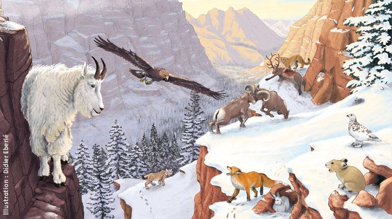 Les index Images Doc, tous les sujets Animaux. Les animaux des montagnes, extrait du magazine Images Doc n°350, pages 10-11.